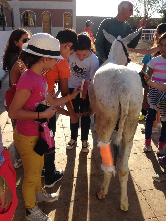 A school visit from Cairo to Luxor to learn about how to take care of donkeys