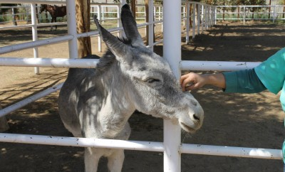 Who said donkeys couldn't be cute? This is felix, one of ACE's residents.