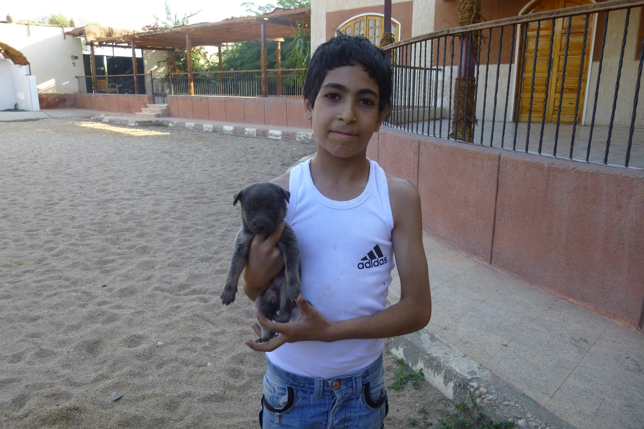 This is Mahmoud. Mahmoud was cycling with his cousins when he heard cries coming from disposed rubbish. He found this little puppy and brought him straight to ACE for a health check. Mahmoud named the puppy 'Rex' and now takes care of him with the advice of ACE.