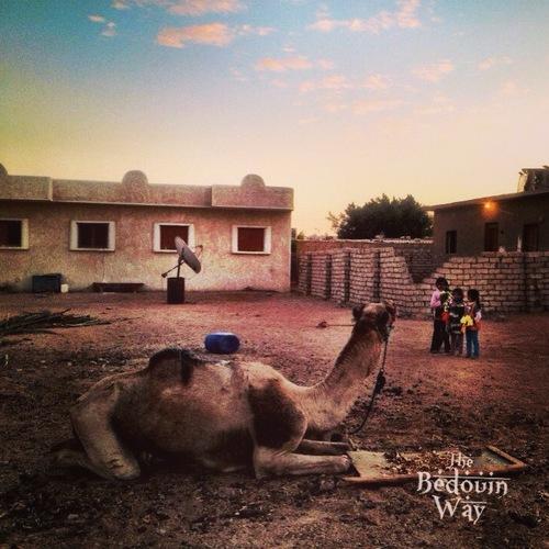 Credit: The Bedouin Way