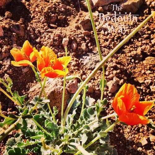 Mountain flowers. Credit: The Bedouin Way