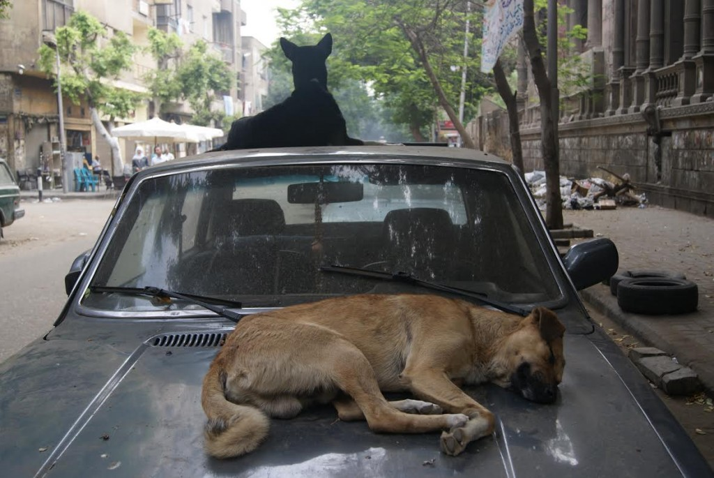 If humans are not using them, stray dogs definitely are.