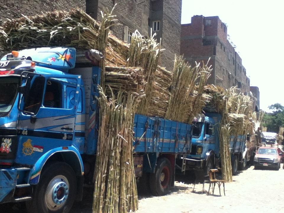 Matareya asab market.