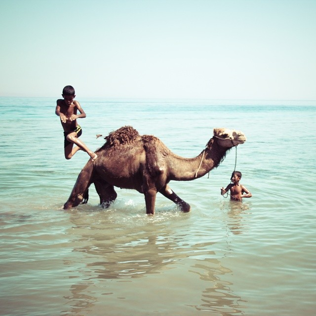 Photo by Shadi Rahimi: For me, being in Egypt has often meant communicating without words, and my taking of photos has shifted over the years from urgency to meditation. In light of all that's taking place now, I find myself seeking joyous moments to capture, the counter-narratives. Coming upon these two Bedouin boys giving their camel a bath in the Red Sea in Dahab, before climbing on its back to dive into the water, as it stood serenely still, was a beautiful scene I'll treasure forever. One of my favorite novelists writes that the greatness of God reveals itself in the simple things. That's what this photo expresses to me.