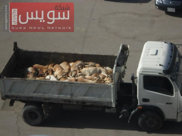 Bodies of dead animals shot dead by the Egyptian Government.