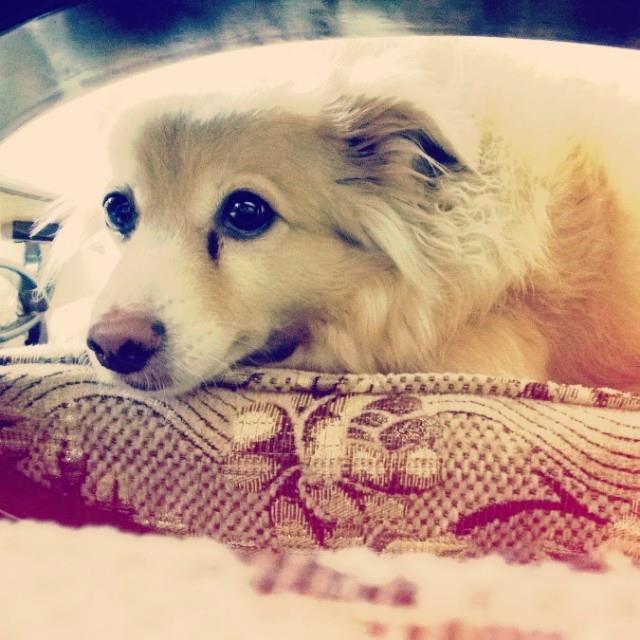 Meet Chiko.