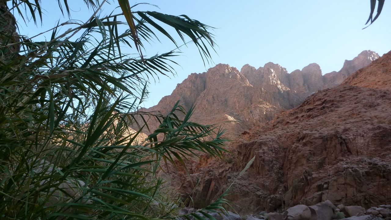 Bamboo thickets in Wadi Madaman, below Jebel Naja.
