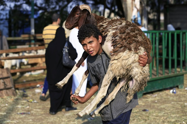 An Egyptian carries a sheep on his shoulder to prepare it to slaughter during Eid Al-Adha (Credit: AP/Hassan Ammar)