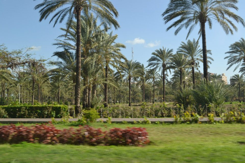 Inside Al-Montaza Park