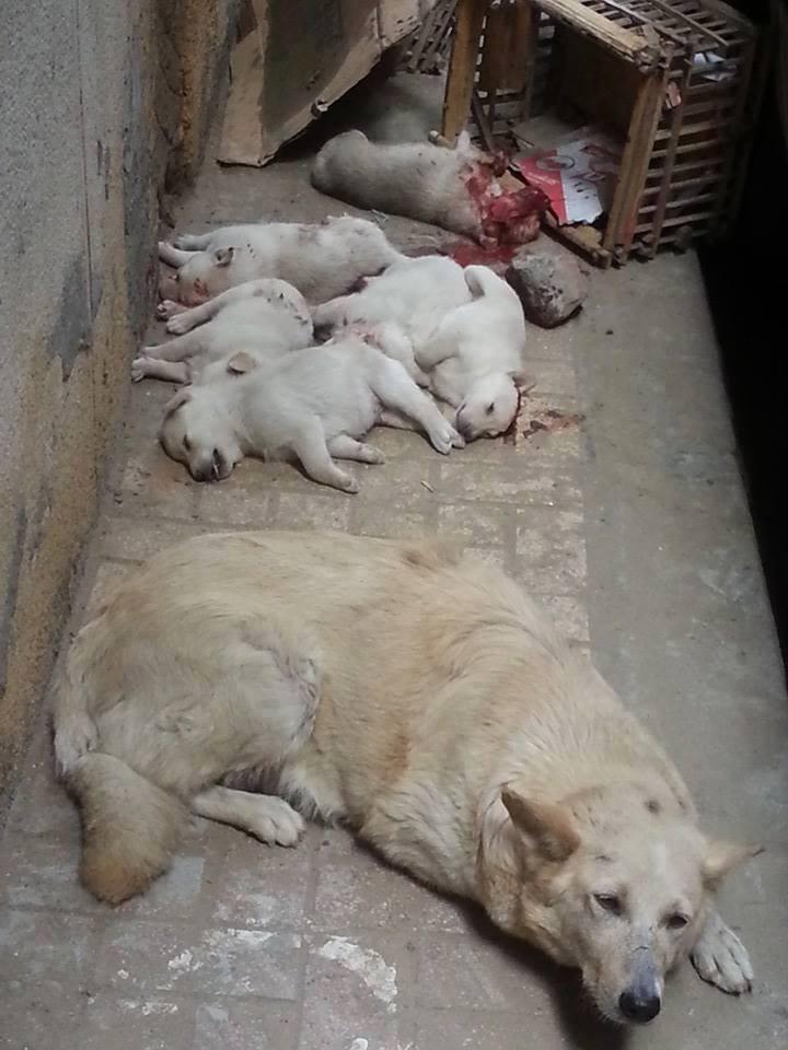 motherdog