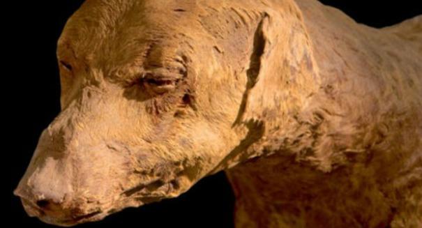 Mummified Dog