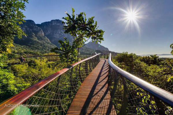 The Centenary Tree Canopy Walkway, Cape Town. Credit: Adam Harrower