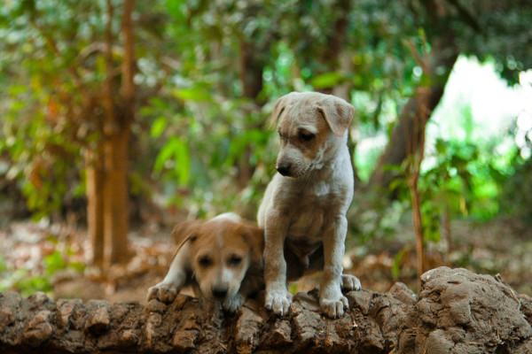 Playful puppies at Elephantine Island in Aswan, Egypt. Credit: Enas El Masry