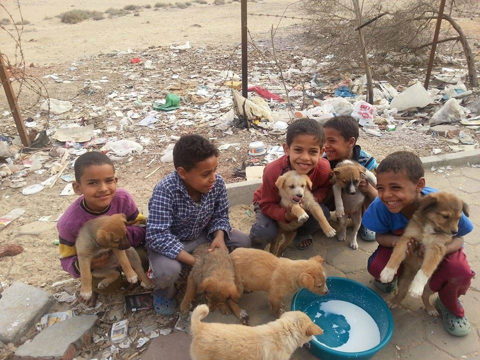 Street children feed stray dogs in Egypt. Credit: Amira Abdou