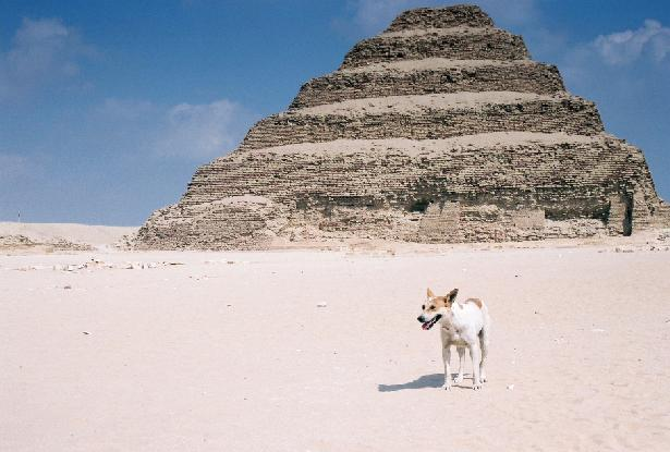 3701 dogs were culled in Giza and civil society organisations can't afford to save any more. Photo credit: Flickr user YoHandy