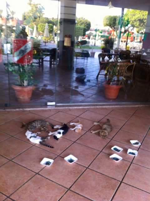 The cats 'massacred' at Al Ahly club