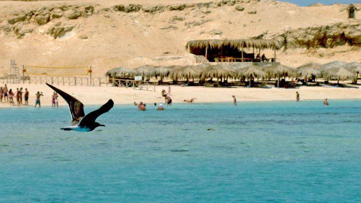 Sandy beaches of Paradise Island in Hurghada. Credit: Enas El Masry