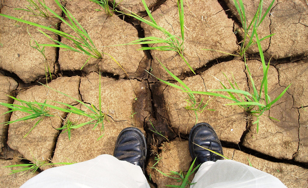 Drought in Syria is suggested to be one of the indirect, yet core reasons behind the current turmoil. Credit: IRRI Images/ Flickr