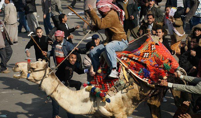 camel_682_1245996a