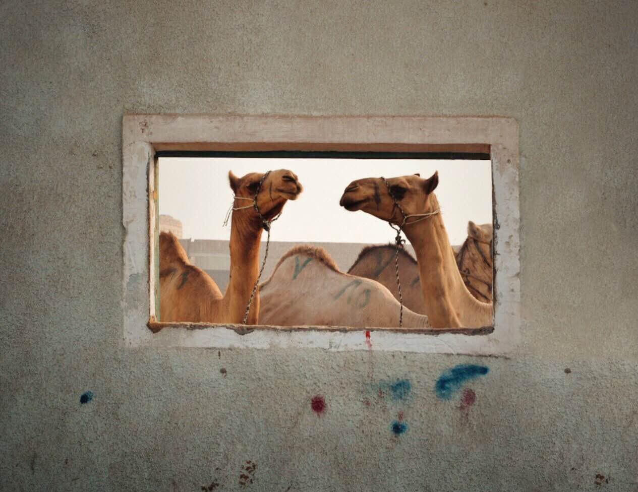 Photo: Mohammed Amer
