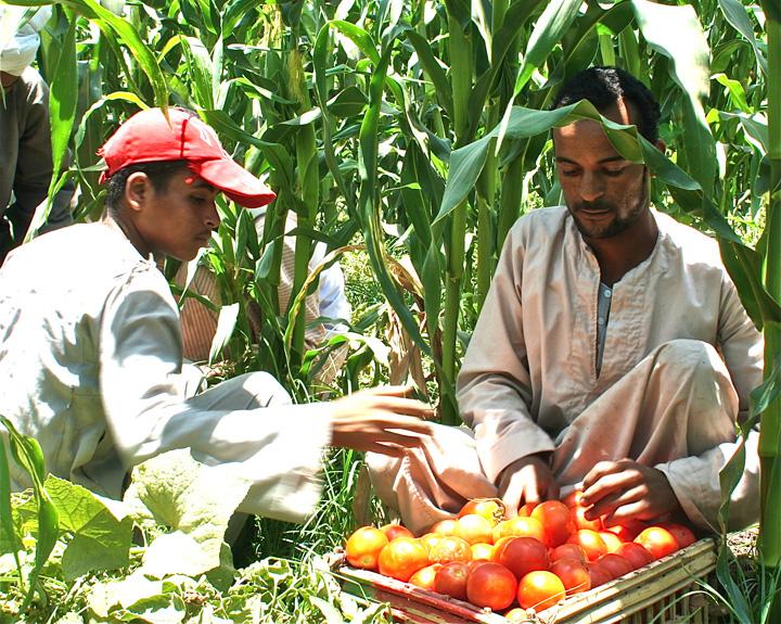 Organic Food Companies In Egypt
