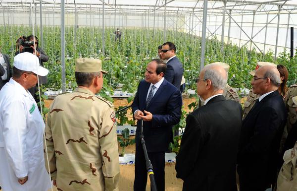 Massive Green House Project Inaugurated in Egypt s Sharqeya ... e73cef5ee2