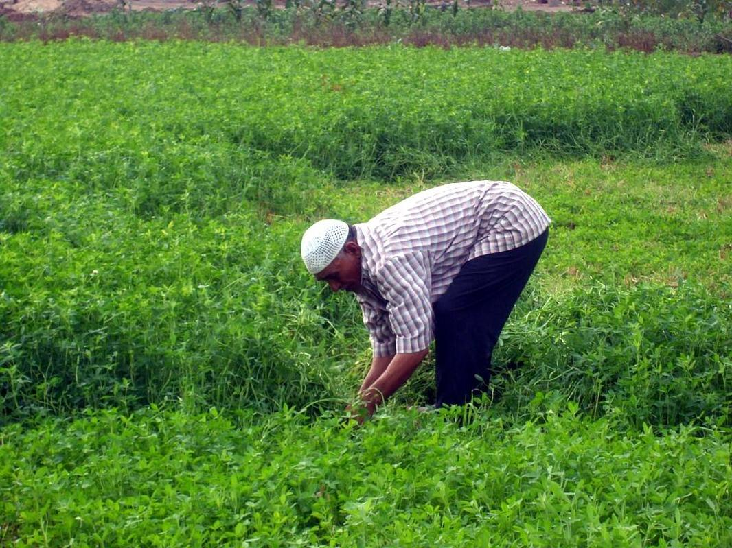 Egypt Announces Project to Digitalize Agricultural Production