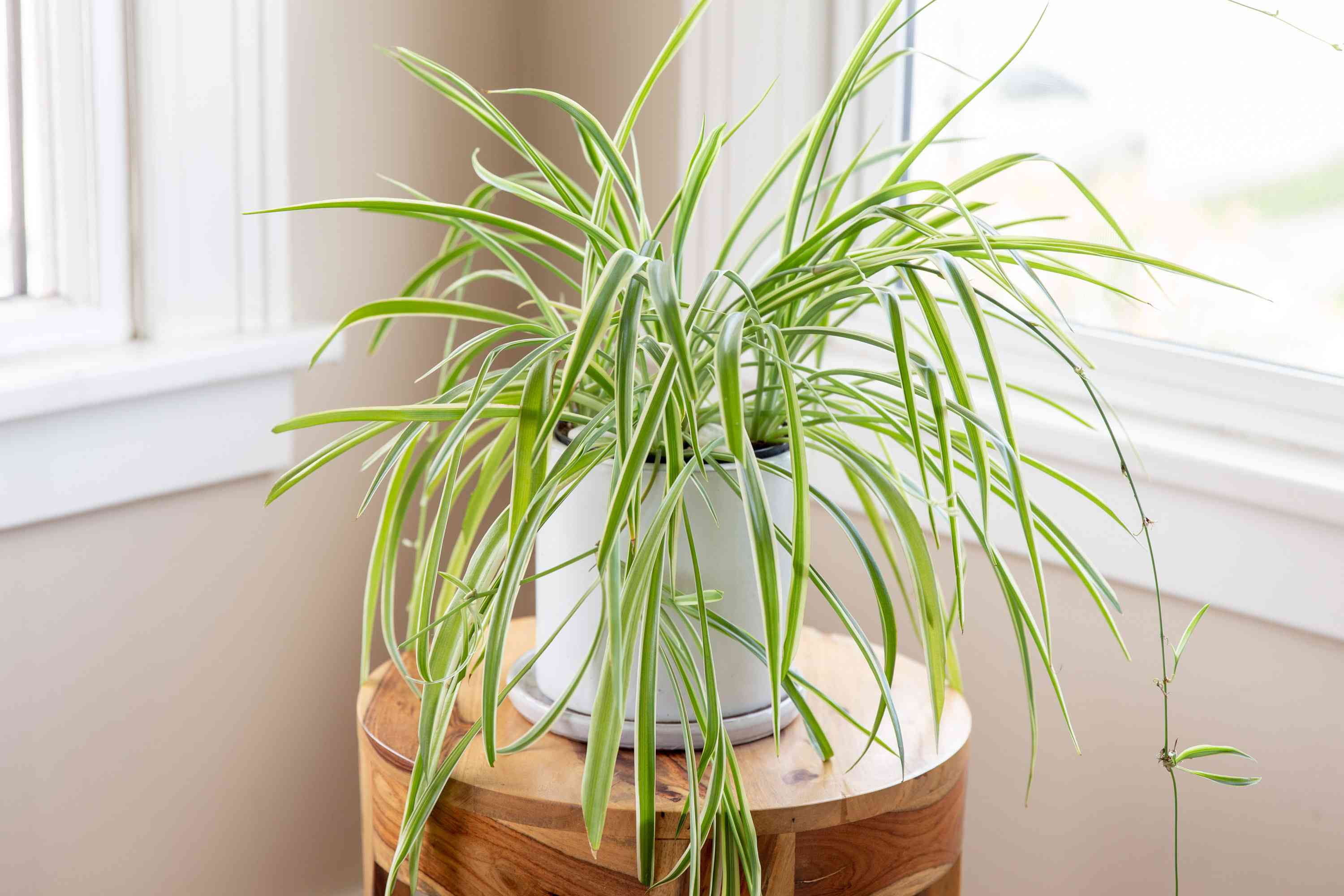 A Little Green Sanctuary A Beginner S Guide To Minding Houseplants Egyptian Streets